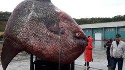 Ρωσία: Έπιασαν ψάρι-γίγαντα βάρους... ενός τόνου!