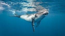 Προσπαθούν να σώσουν φαλαινάκι που ξεβράστηκε στην Κρήτη