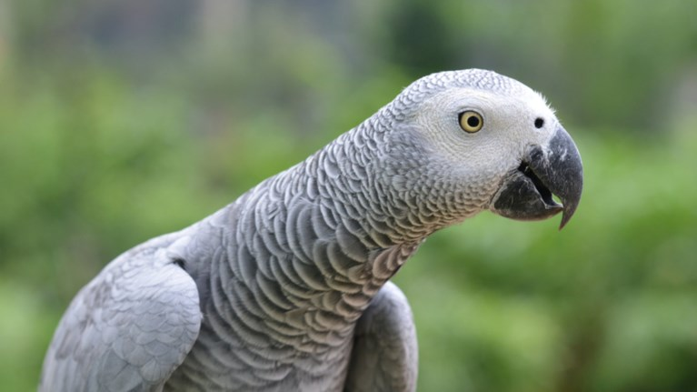 papagalos-koroidepse-to-alexa-kai-pariggeile-apo-to-amazon