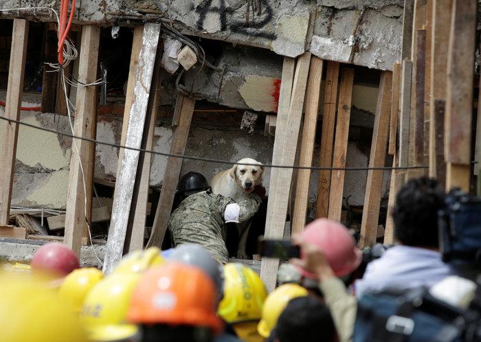 Τα σκυλιά-διασώστες στα ερείπια του σχολείου