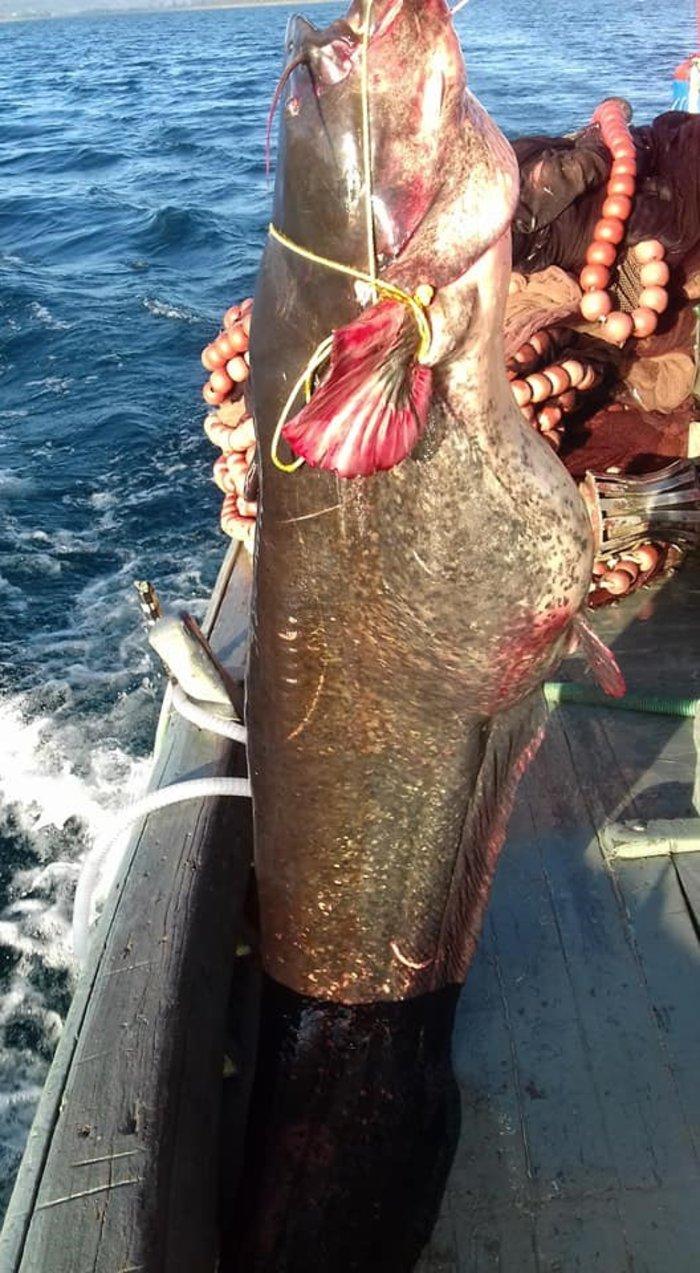 Στα δίχτυα του ψαρά γουλιανός βάρους 85 κιλών! (ΦΩΤΟ) - εικόνα 3
