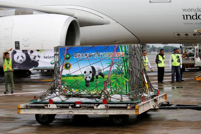 «Panda mania» στην Ινδονησία για το ζεύγος που ήρθε από Κίνα