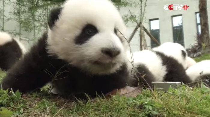 Πάρτι για 42 μωρά πάντα που γεννήθηκαν στην Κίνα - εικόνα 3