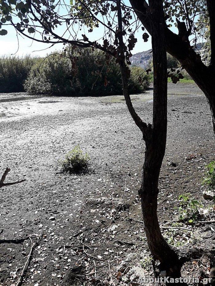 Μετά την Παμβώτιδα «στεγνώνει» και η λίμνη Καστοριάς [φωτό] - εικόνα 2