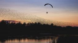 kanontas-paragliding-dipla-sta-apodimitika-poulia-eikones