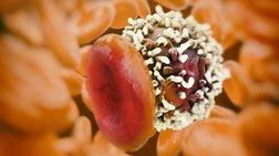 Μία έως δέκα μεταλλάξεις χρειάζονται για να ξεκινήσει ο καρκίνος