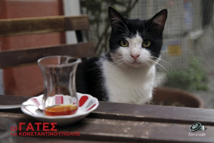 Μια ταινία για τις μοναδικές γάτες της Κωνσταντινούπολης