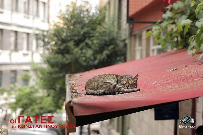 Μια ταινία για τις μοναδικές γάτες της Κωνσταντινούπολης - εικόνα 2
