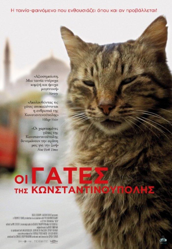 Μια ταινία για τις μοναδικές γάτες της Κωνσταντινούπολης - εικόνα 3