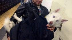 Νέα Υόρκη: Απαγόρευσαν τα ζώα στο μετρό αλλά η λύση βρέθηκε! (ΦΩΤΟ)