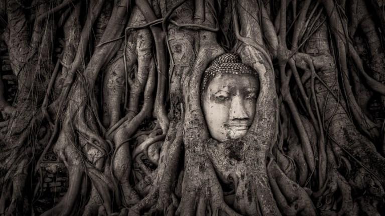 historic-photographer-of-the-year-ksexasmena-magika-mnimeia-tou-planiti