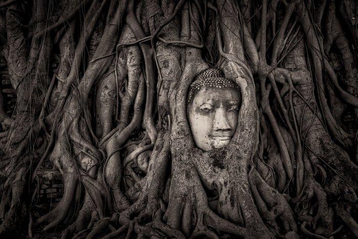 Mathew Browne –Ο Βούδας των ριζών, Αγιουτάγια,Ταϊλάνδη