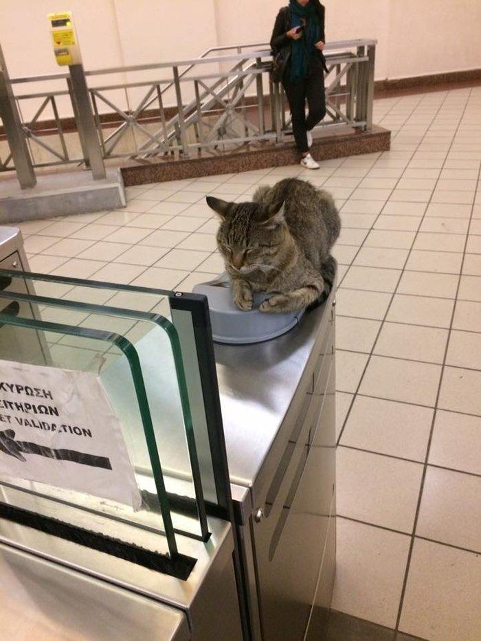 gatos monasthraki