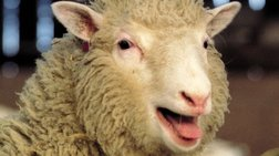 Νέα στοιχεία: Δεν έφταιγε η κλωνοποίηση για την αρθρίτιδα στην Ντόλι