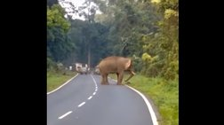 Ελέφαντας ποδοπάτησε άνθρωπο μέχρι θανάτου - Σκληρές εικόνες (ΒΙΝΤΕΟ)