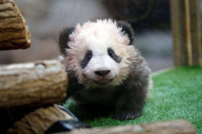 Μπριζίτ Μακρόν: Η πρώτη κυρία της Γαλλίας «βάφτισε» ένα γλυκύτατο panda