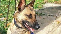 Η αστυνομία για τον σκύλο της: Σ' ευχαριστούμε πολύ GRACE για όσα πρόσφερες