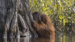 National Geographic: Συγκλονιστικές φωτογραφίες από την άγρια φύση