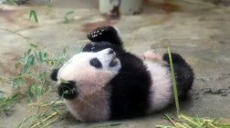 Το νεογέννητο πάντα highlight στον ζωολογικό κήπο του Τόκιο