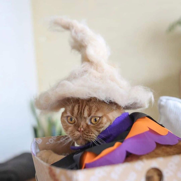 c28000dd648a ... των γάτων με καπέλα που μοιάζουν να είναι σχεδιασμένα από οίκους μόδας  σε ένα φωτογραφικό αφιέρωμα που κάνει τα ρούχα των γάτων να φαίνονται τα πιο  ...