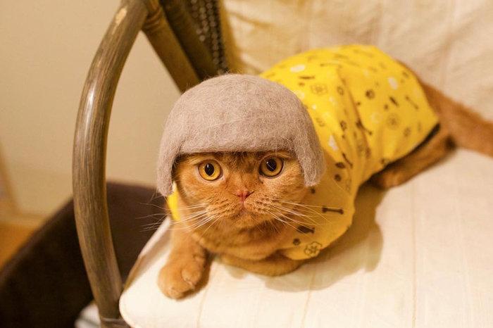 39f6daef630b Αυτές είναι οι πιο cult γάτες του κόσμου και έγιναν viral!