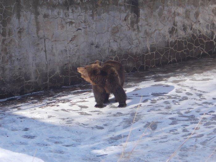 Κυνηγός - σωτήρας για μικρή αρκούδα που έπεσε σε δεξαμενή - φωτό -