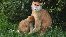 89cef11532 Βρήκαν 22.500 «μαϊμού» επώνυμα ρούχα σε αποθήκη στο Περιστέρι 2ο  περιστατικο dekatreis-maimoudes-thumata-purkagias-se-parko-safari-sti-