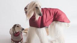 Το Μιλάνο είναι πρωτεύουσα της κομψότητας και για... σκύλους