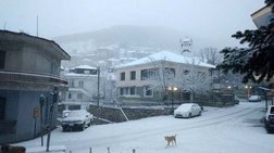 Στα «λευκά» ντύθηκαν τα ορεινά της Λάρισας [εικόνες]