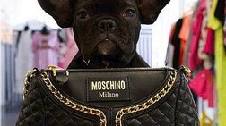 Το Μιλάνο, πρωτεύουσα της κομψότητας και για ... σκύλους