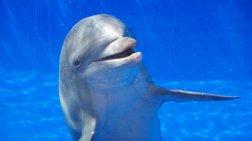 ta-delfinia-anagnwrizoun-ton-eauto-tous-ston-kathrefti