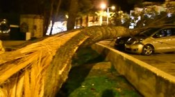Έπεσαν δέντρα και πλάκωσαν αυτοκίνητα στο Ναύπλιο [ΦΩΤΟ-ΒΙΝΤΕΟ]