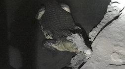 brikan-krokodeilo-se-upogeio-meta-apo-ereuna-gia-opla