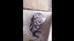 Αλήθεια ή ψέματα; Απίστευτο βίντεο με έναν αρουραίο να κάνει ...μπάνιο