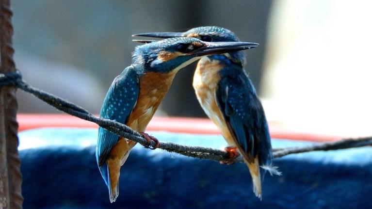 Φτερουγίσματα από περισσότερα από 70 είδη πουλιών