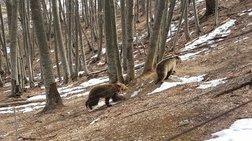 Ξύπνησαν οι αρκούδες στο καταφύγιο και φέρνουν την άνοιξη