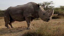 Πέθανε ο τελευταίος λευκός ρινόκερος στον κόσμο