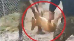 Γιαννιτσά: Σάλος με πρωτοφανή κακοποίηση σκύλου από φαντάρους