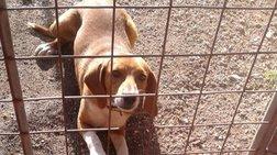 Αγνοείται η τύχη του σκύλου που κακοποίησαν φαντάροι στην Κόνιτσα