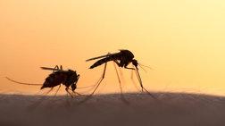 Εφαρμογή σχεδίου για την καταπολέμηση των κουνουπιών στη Δυτική Ελλάδα