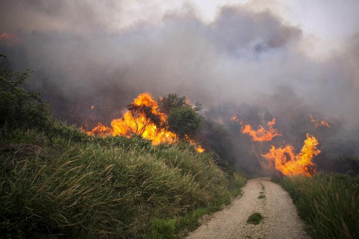Συνεχίζεται η μάχη με τις φλόγες στην Ηλεία με 24 οχήματα και 2 αεροπλάνα - εικόνα 6