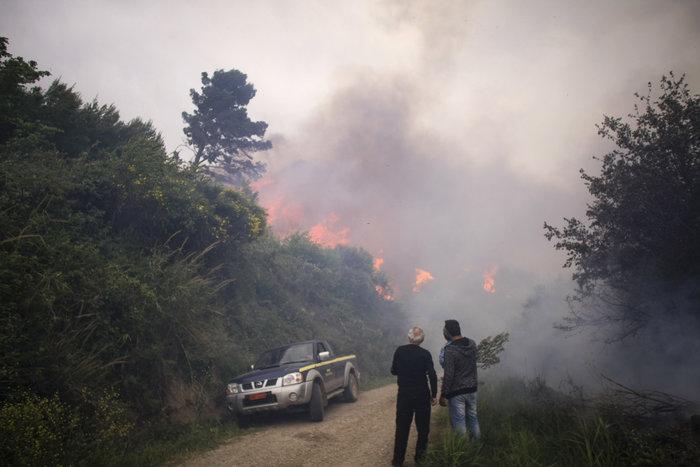 Συνεχίζεται η μάχη με τις φλόγες στην Ηλεία με 24 οχήματα και 2 αεροπλάνα - εικόνα 9