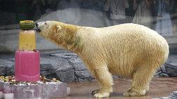 Πέθανε ο Ινούκο, η πολική αρκούδα της Σιγκαπούρης
