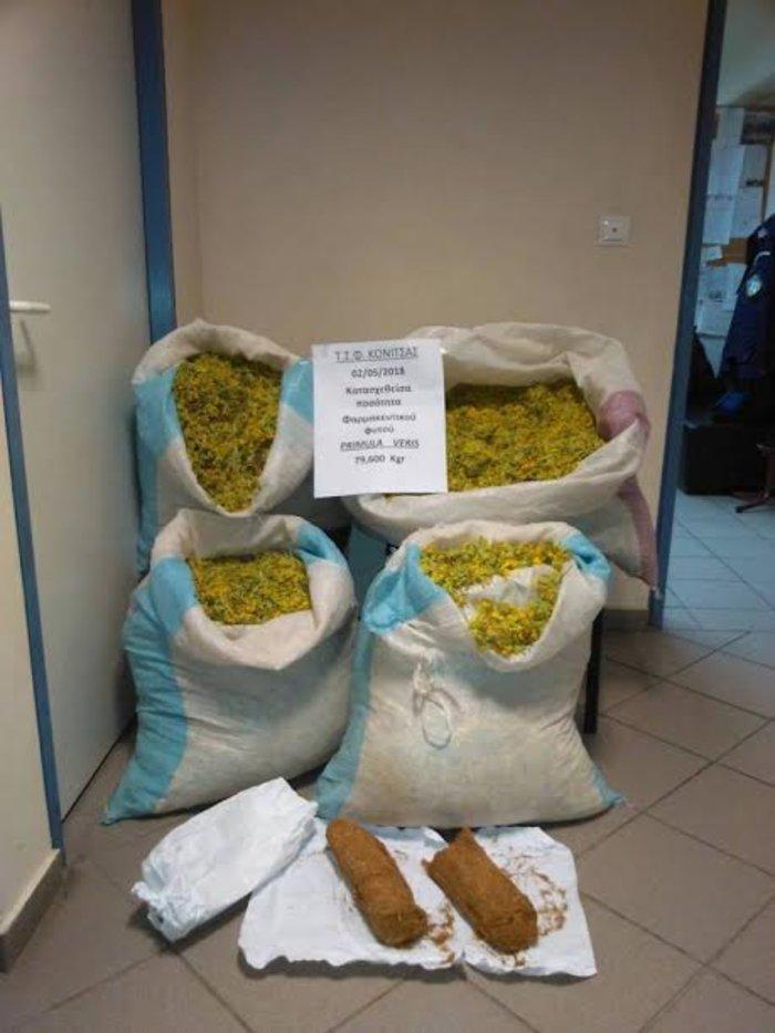 Αλβανοί «θερίζουν» τα βότανα από τα ελληνικά βουνά. Νέες συλλήψεις - εικόνα 3