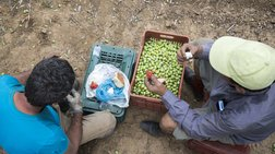 Διαγραφή χρεών έως 60% για χιλιάδες δανειολήπτες αγρότες