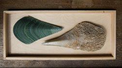 Second Nature: Πρόγραμμα με σκοπό την έρευνα για τη θαλάσσια ρύπανση