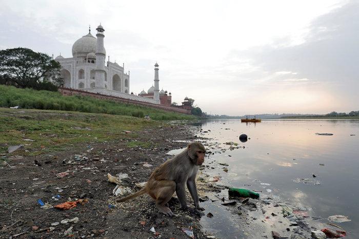 Το Ταζ Μαχάλ χρωματίζεται... πράσινο από τη ρύπανση - Εικόνες
