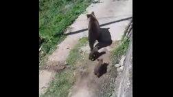 """""""Κατάληψη"""" σε ακατοίκητο σπίτι από αρκούδα και δύο αρκουδάκια [βίντεο]"""