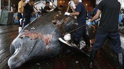 Σφαγή φαλαινών στην Ανταρκτική από Ιάπωνες αλιείς
