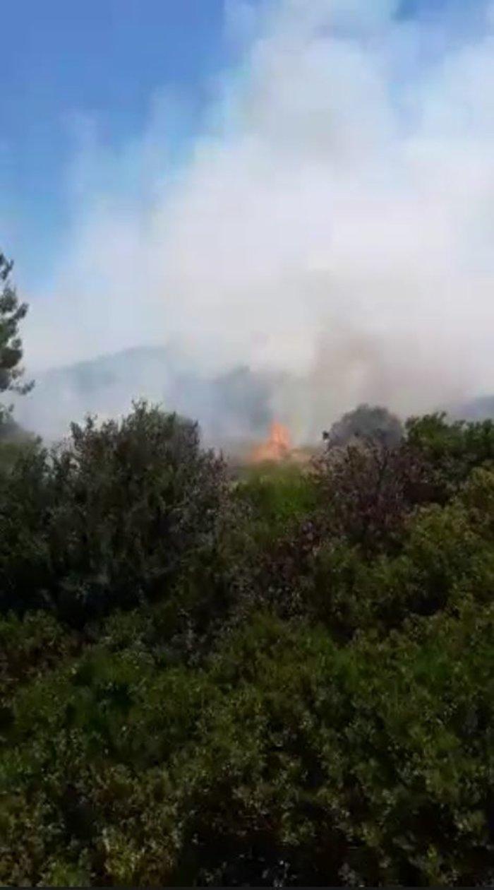 Μεγάλη φωτιά στο Άλσος Συγγρού - Στο σημείο ισχυρές πυροσβεστικές δυνάμεις